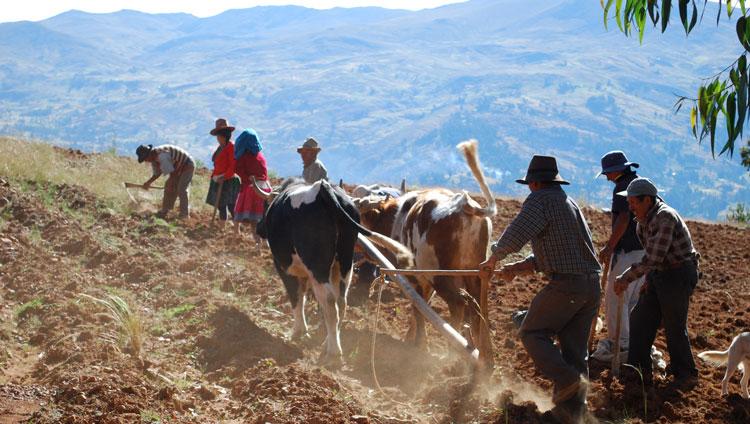 Peru, treks, climbs, hiking, - working-locals-huaraz-treks