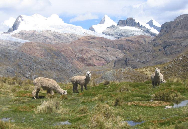 Huayhuash-treks-Viconga