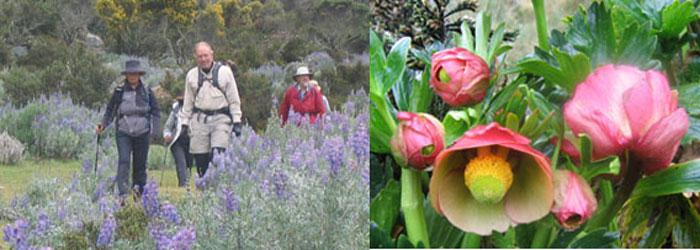 cordillera-blanca-trek-flowers