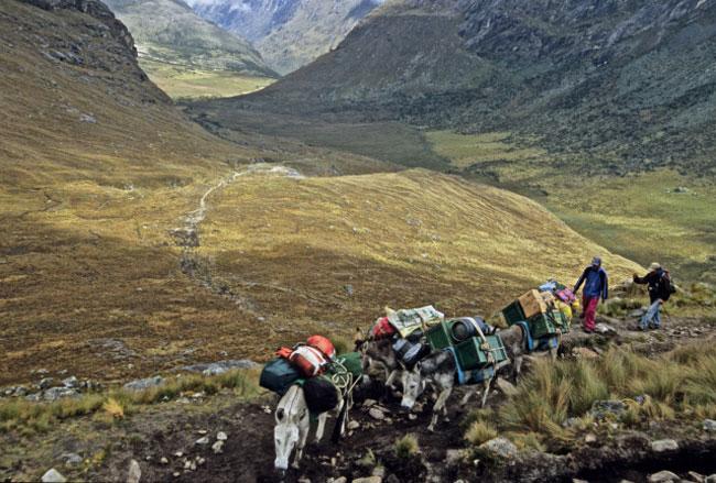 burros-heading-up-to-Punta-Union-pass