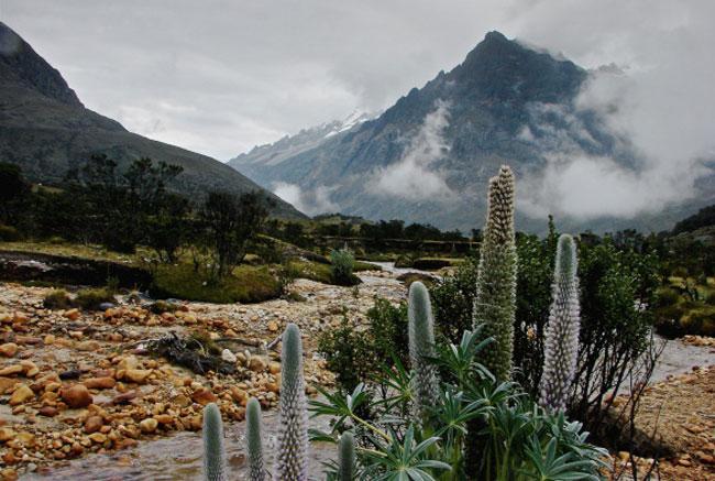 santa-cruz-hiking-lupin-flowers