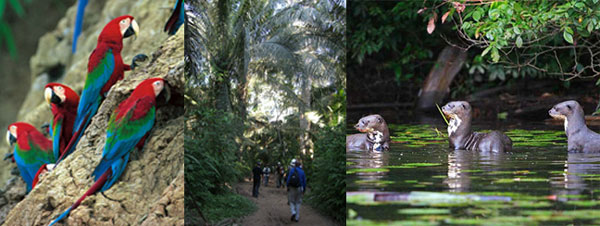 amazon-rain-forest-tours