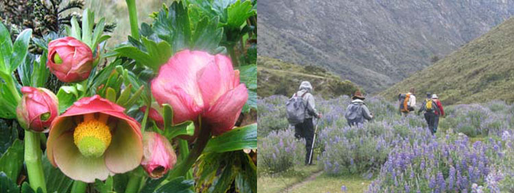 Peru, treks, climbs, hiking, - peru-flowers-and-hiking-treks