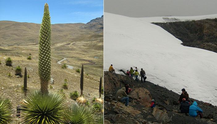 pastoruri-glacier-puyas-raymondi