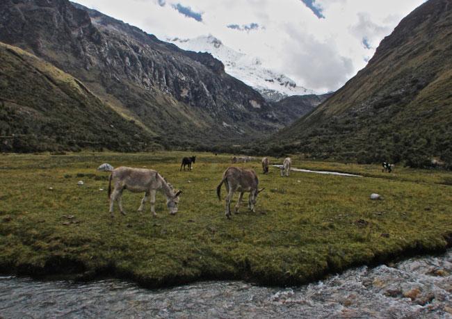 climb-pisco-cebollapampa-camp-site